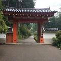 Photos: 三室戸寺