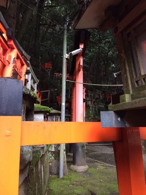 伏見稲荷大社16