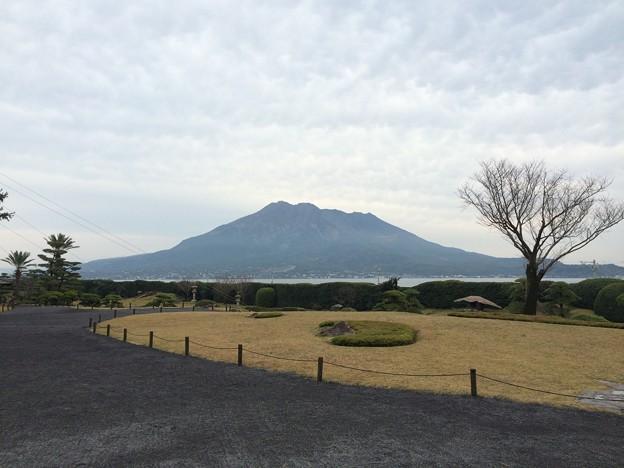 仙巌園から見た桜島