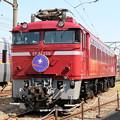 Photos: EF81 139(カシオペアHM)