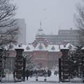 Photos: 雪にも負けず