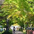 Photos: 秋の軽井沢#1
