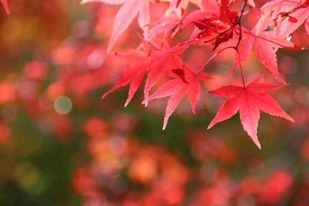 もみじ湖の紅葉#2
