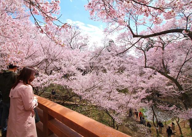 桜雲橋の上で