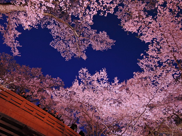 桜色に染まる夜空