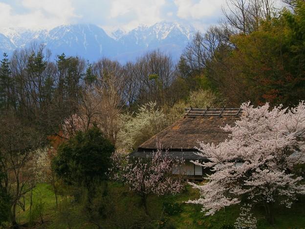 伊那谷の春