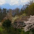 写真: 伊那谷の春