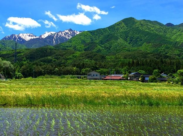 写真: 薫風