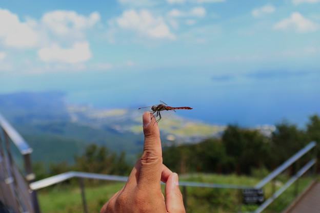 Photos: 蜻蛉のお出迎え