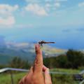 写真: 蜻蛉のお出迎え