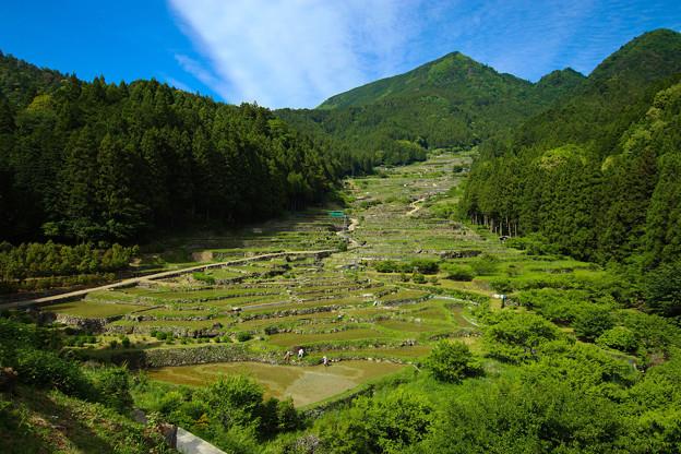 Photos: 四谷の千枚田【昼】