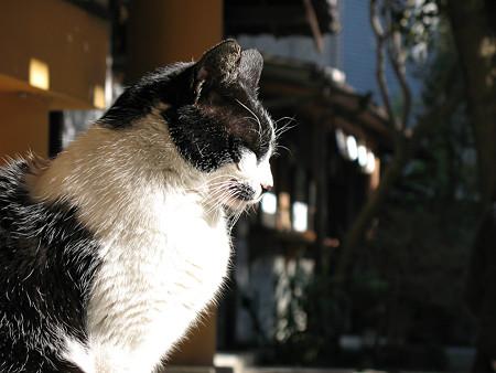神社の猫 080208133103