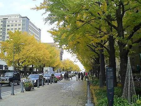 081128-日本大通り (2)