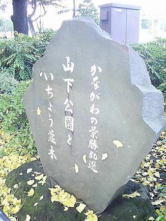 081128-山下公園通り (2)