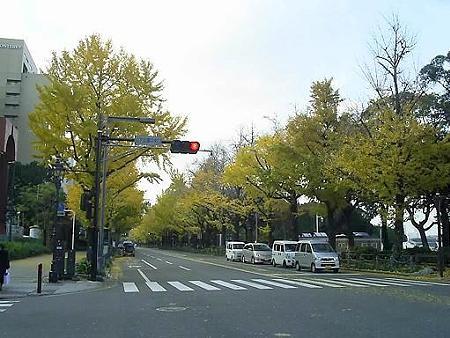 081128-山下公園通り (3)