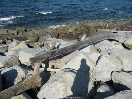160110-伊良湖岬 (4)
