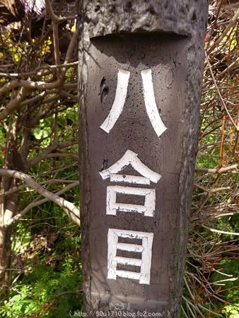 160226-松田町 河津桜 (49)