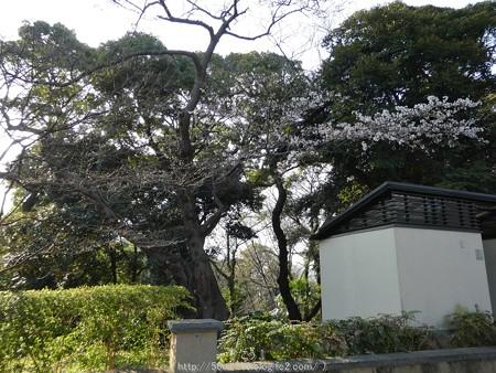 160321-元町公園 (6)