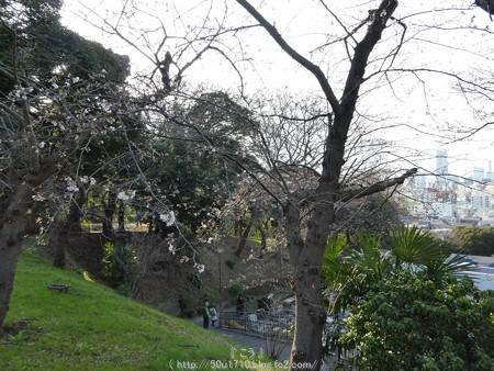 160321-元町公園 (8)