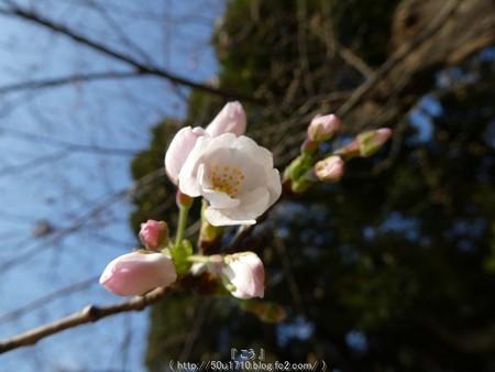 160321-元町公園 (16)