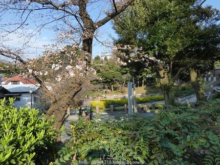 160321-元町公園 (37)