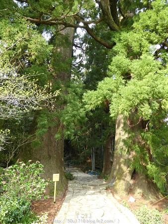 160324-熊野古道 大門坂 (29)
