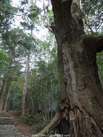 160324-熊野古道 大門坂 (44)