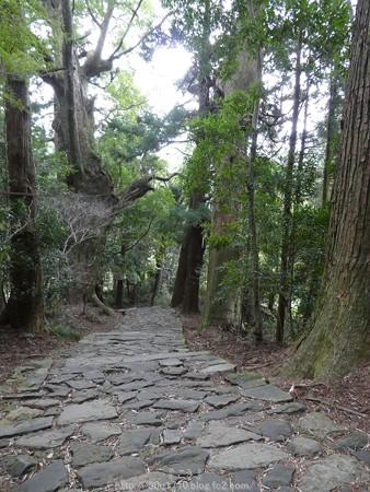 160324-熊野古道 大門坂 (48)