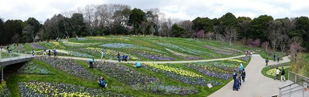 180324-里山ガーデン 大花壇 パノ