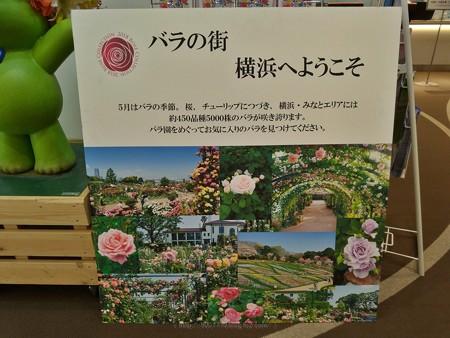 P_20190426_ガーデンベアフォトスポット@Tokyo City i (9)