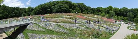 170602-里山ガーデン (7)
