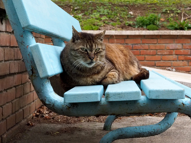 青いベンチで。