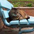 Photos: 青いベンチで。