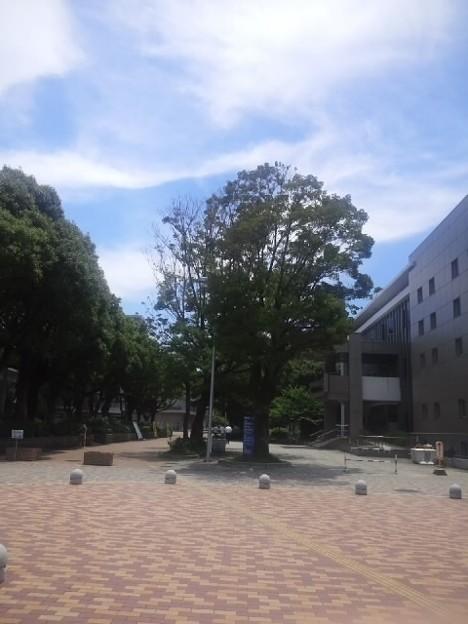 【13720号】素材:キャンパス 平成300622 #NPS5