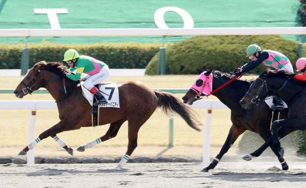 タガノアーバニティ(2018/02/04 京都4R 4歳上障害未勝利)