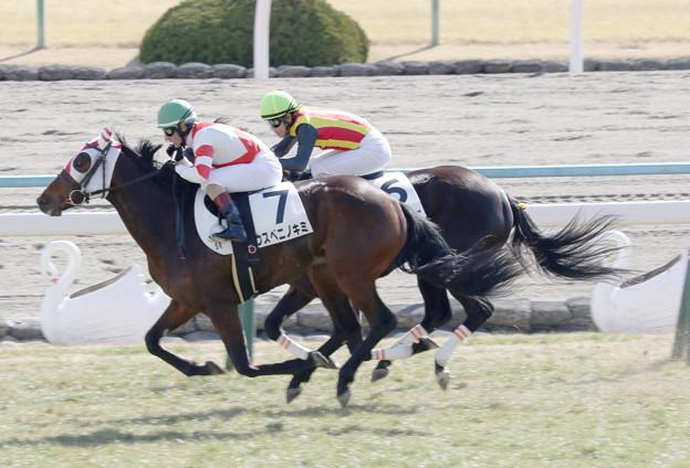 ウスベニノキミ(2018/02/04 京都5R 3歳未勝利)