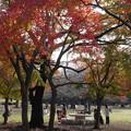 光が丘公園 紅葉 2015.11.29
