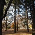 光が丘公園樹陰と紅葉