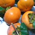 Photos: 柿の収穫5個
