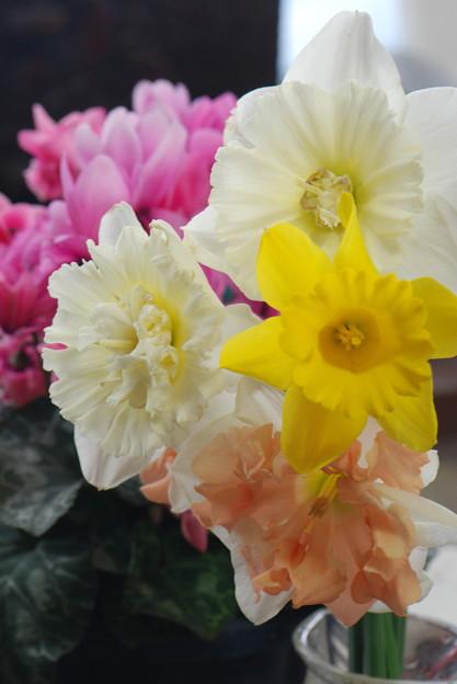 変わり水仙切り花
