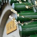 写真: 翠松苑の梅2