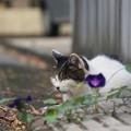 Photos: 道端の猫