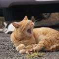 Photos: 駐車場のあくび猫