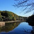 写真: 泉の森1