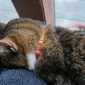 御誕生寺の猫3