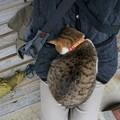 御誕生寺の猫4