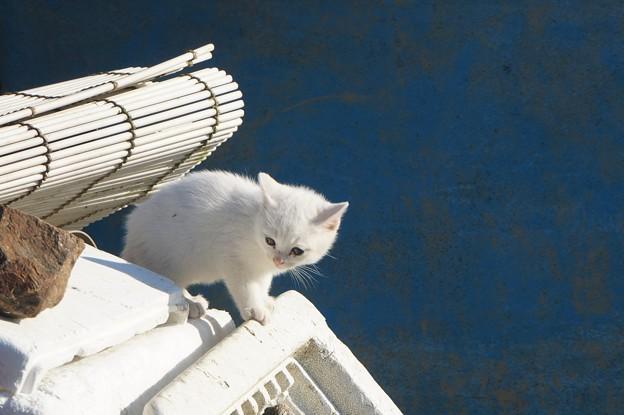 沖島の子猫6