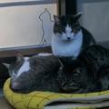 御誕生寺の猫9