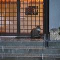 御誕生寺の猫11