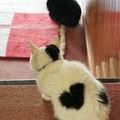 Photos: ハートマークな猫